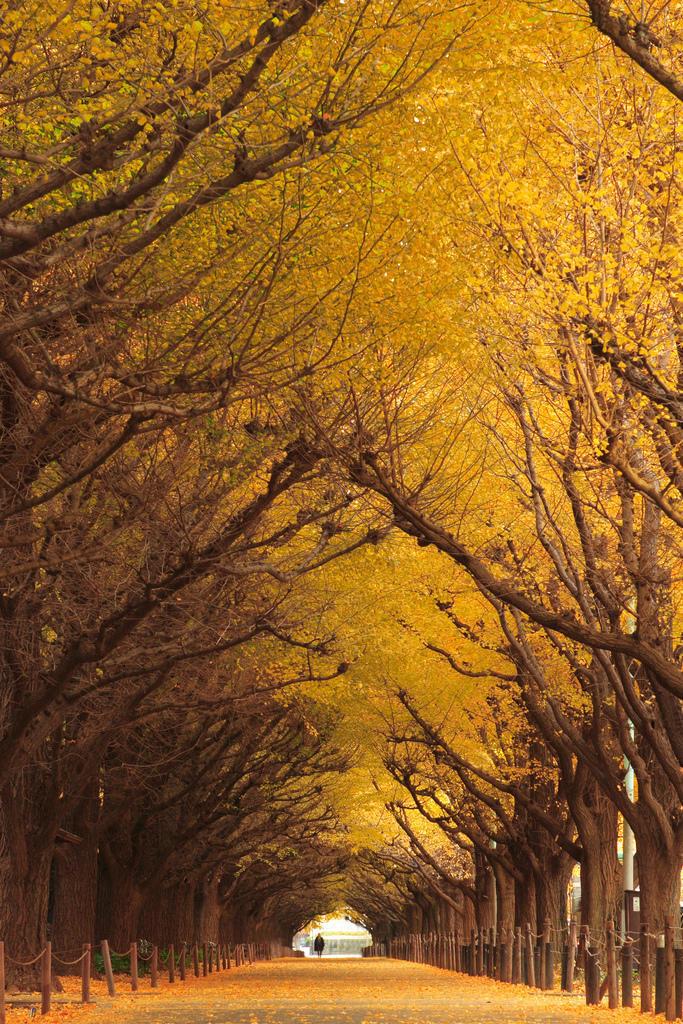 044 10 самых красивых тоннелей из деревьев в мире