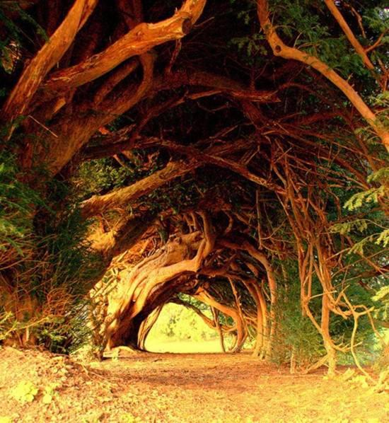 055 10 самых красивых тоннелей из деревьев в мире