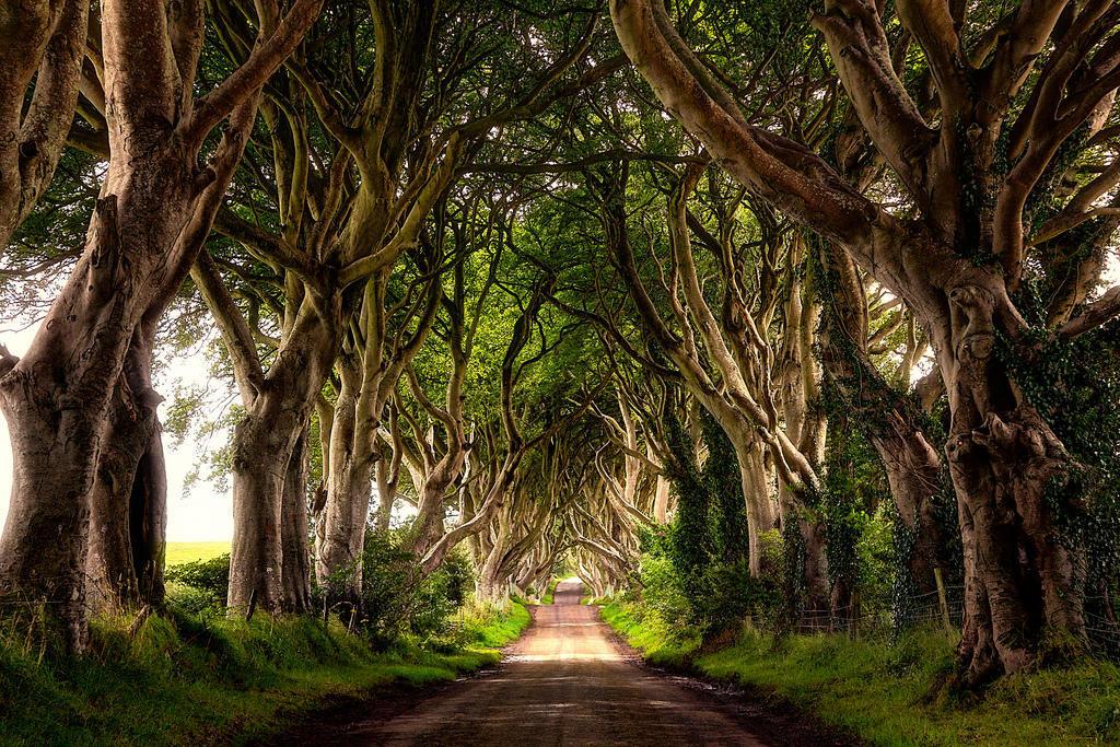 065 10 самых красивых тоннелей из деревьев в мире