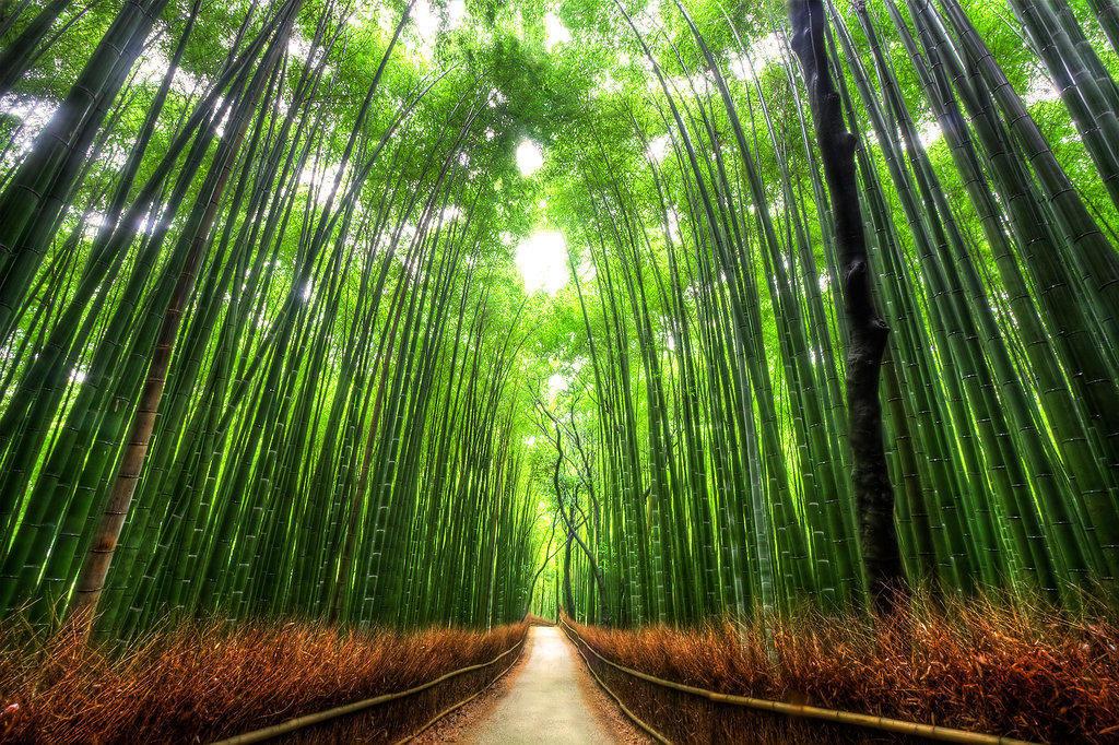 075 10 самых красивых тоннелей из деревьев в мире