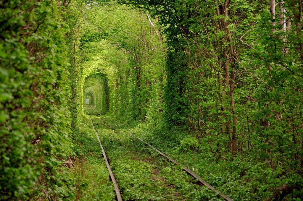 085 10 самых красивых тоннелей из деревьев в мире