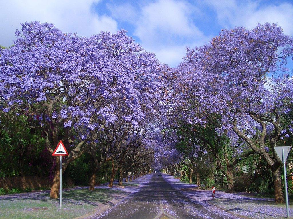 094 10 самых красивых тоннелей из деревьев в мире