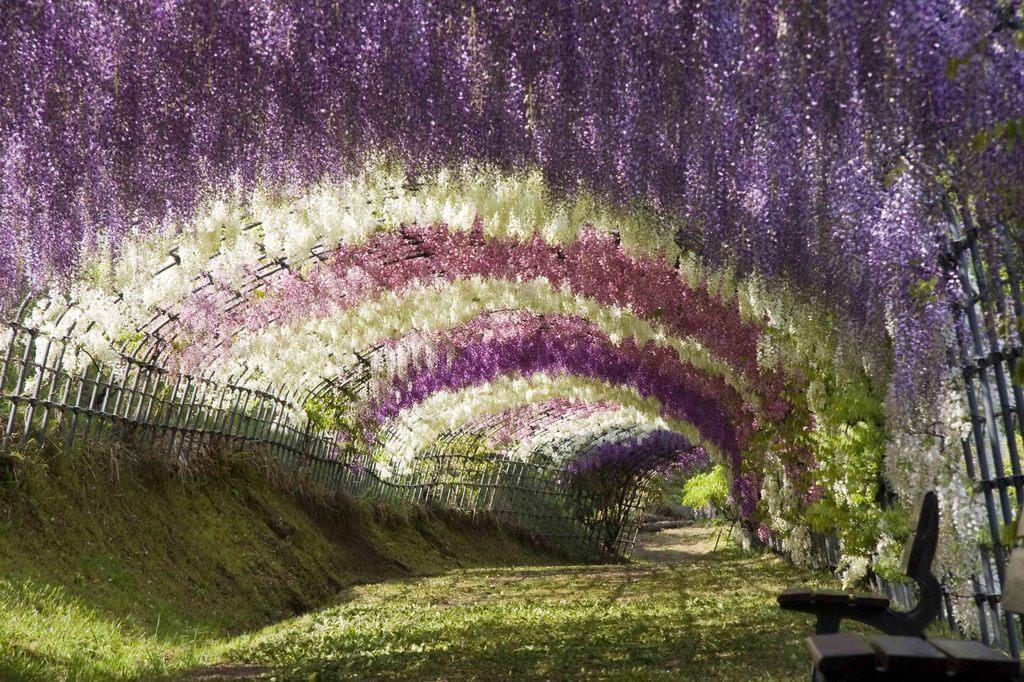 106 10 самых красивых тоннелей из деревьев в мире