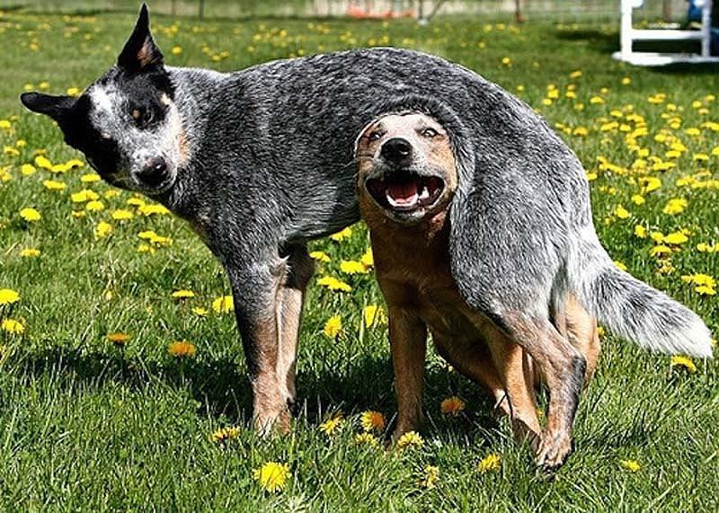 Собаки Улыбаки и Псы Барабаки