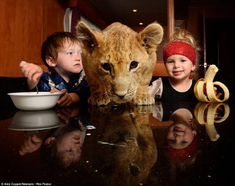 Australias biggest animal circus 3 800x634 Маленький циркач и его питомец   львенок Цимби