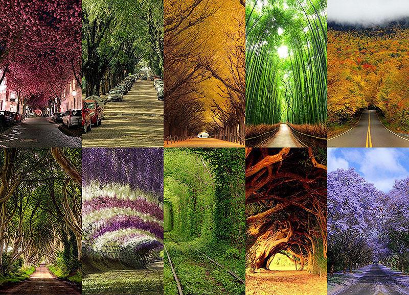 BIGPIC16 10 самых красивых тоннелей из деревьев в мире