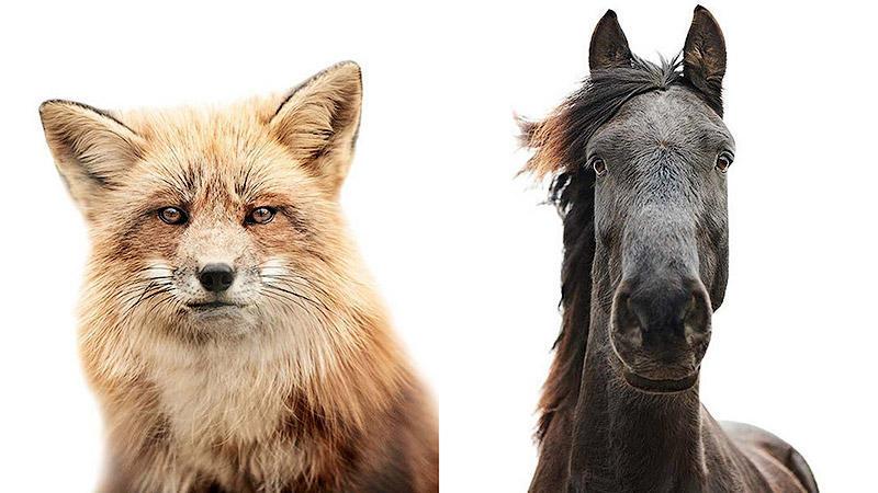 Мимика животных в работах Мортена Колдби