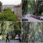 Удивительная улица Руа Гонсалу де Карвальо
