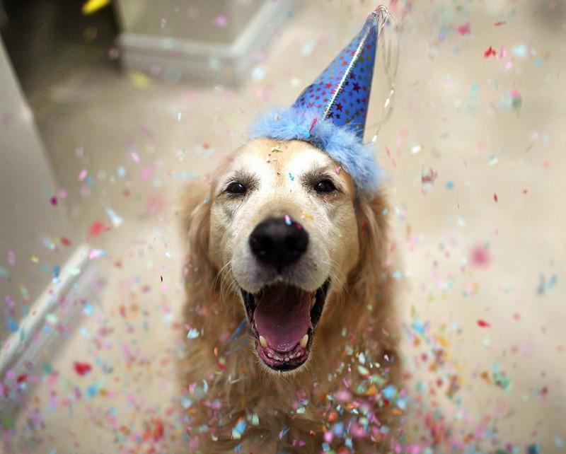 Champ01 800x642 Чэмп   самый счастливый пес в мире