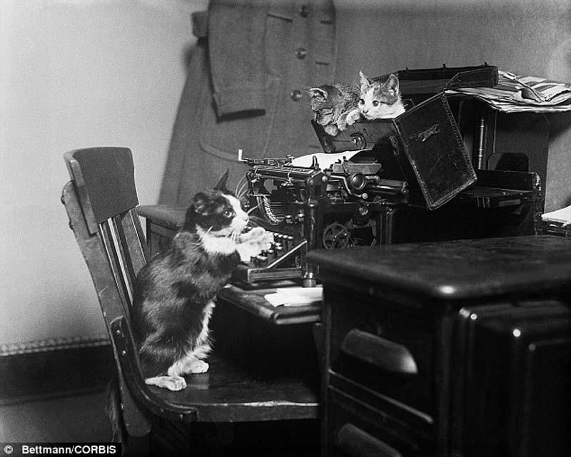 The original Grumpy Cat 10 Котэ «доинтернетного» периода