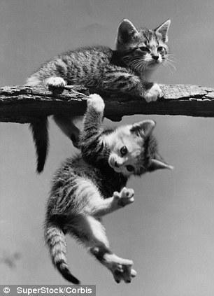 The original Grumpy Cat 13 Котэ «доинтернетного» периода