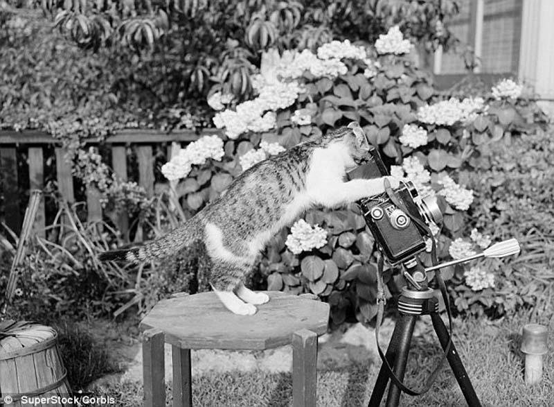 The original Grumpy Cat 15 Котэ «доинтернетного» периода