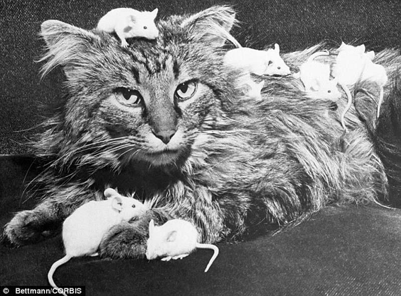 The original Grumpy Cat 16 Котэ «доинтернетного» периода