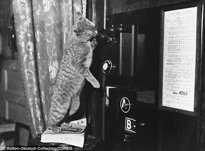 The original Grumpy Cat 17 Котэ «доинтернетного» периода