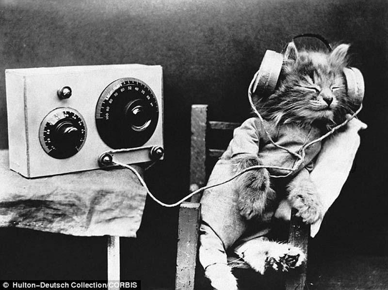 The original Grumpy Cat 18 Котэ «доинтернетного» периода