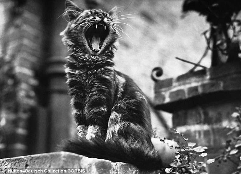 The original Grumpy Cat 19 Котэ «доинтернетного» периода