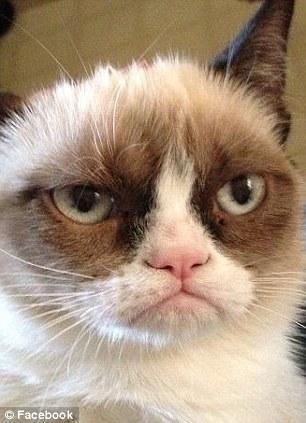 The original Grumpy Cat 2 Котэ «доинтернетного» периода