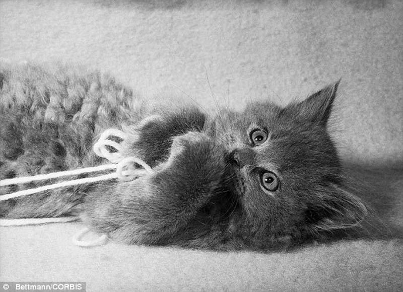 The original Grumpy Cat 20 Котэ «доинтернетного» периода