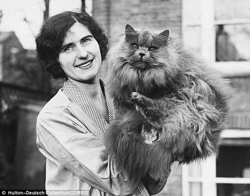 The original Grumpy Cat 21 Котэ «доинтернетного» периода