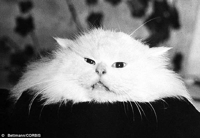 The original Grumpy Cat 22 Котэ «доинтернетного» периода