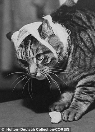 The original Grumpy Cat 23 Котэ «доинтернетного» периода