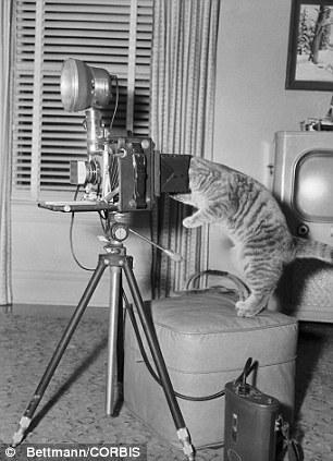 The original Grumpy Cat 24 Котэ «доинтернетного» периода