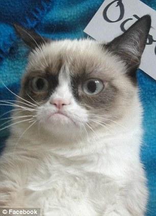 The original Grumpy Cat 3 Котэ «доинтернетного» периода