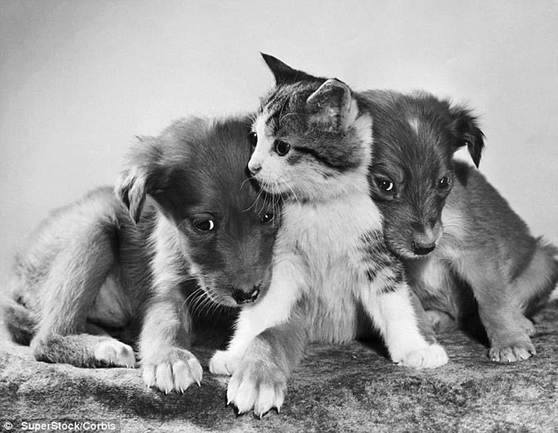The original Grumpy Cat 5 Котэ «доинтернетного» периода