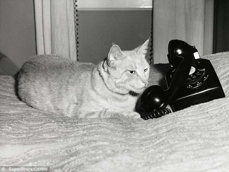 The original Grumpy Cat 6 Котэ «доинтернетного» периода