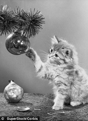 The original Grumpy Cat 7 Котэ «доинтернетного» периода