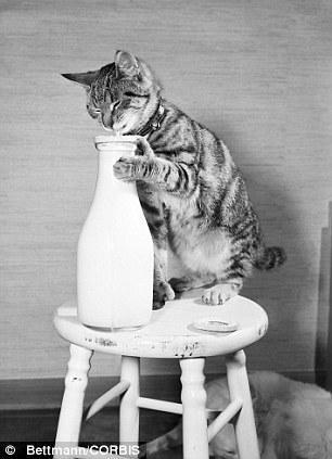 The original Grumpy Cat 8 Котэ «доинтернетного» периода