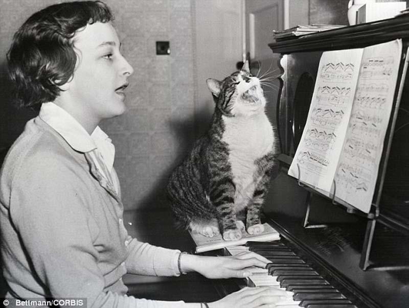 The original Grumpy Cat 9 Котэ «доинтернетного» периода