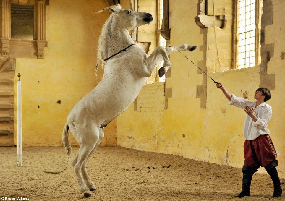 horse ballet school 1 Балетная школа для лошадей