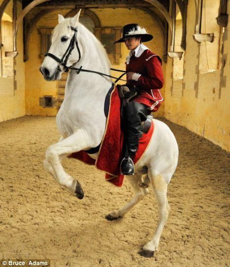 horse ballet school 10 Балетная школа для лошадей