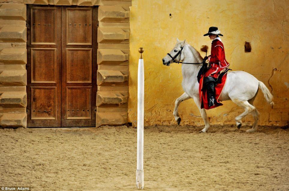 horse ballet school 11 Балетная школа для лошадей