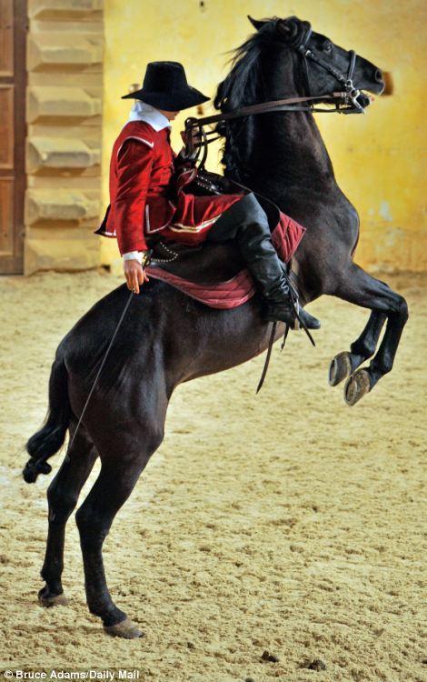 horse ballet school 2 Балетная школа для лошадей