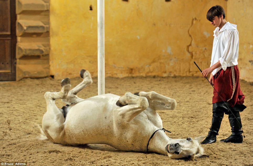 horse ballet school 5 Балетная школа для лошадей