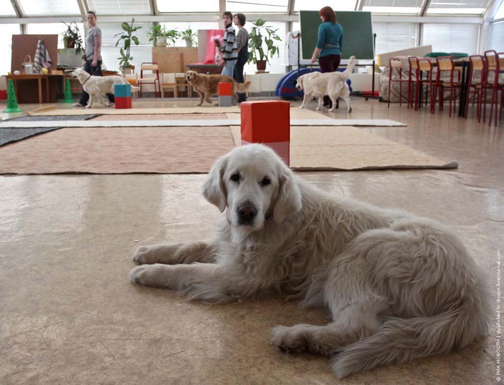 kanisterapiya 11 Канис терапия: как собаки помогают больным детям