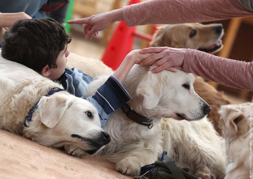 kanisterapiya 2 Канис терапия: как собаки помогают больным детям