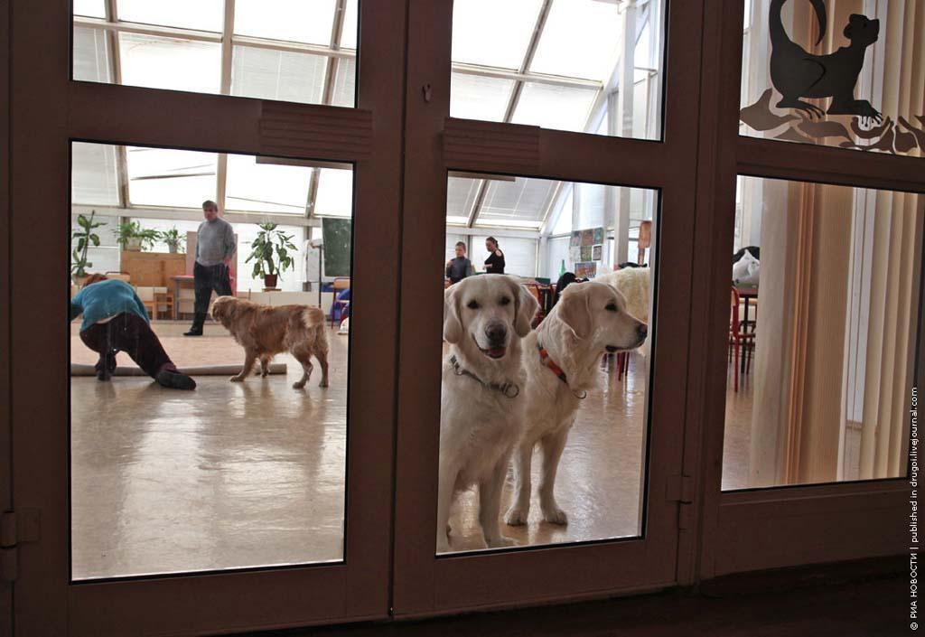 kanisterapiya 3 Канис терапия: как собаки помогают больным детям