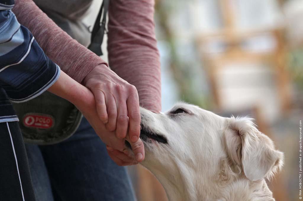 kanisterapiya 4 Канис терапия: как собаки помогают больным детям