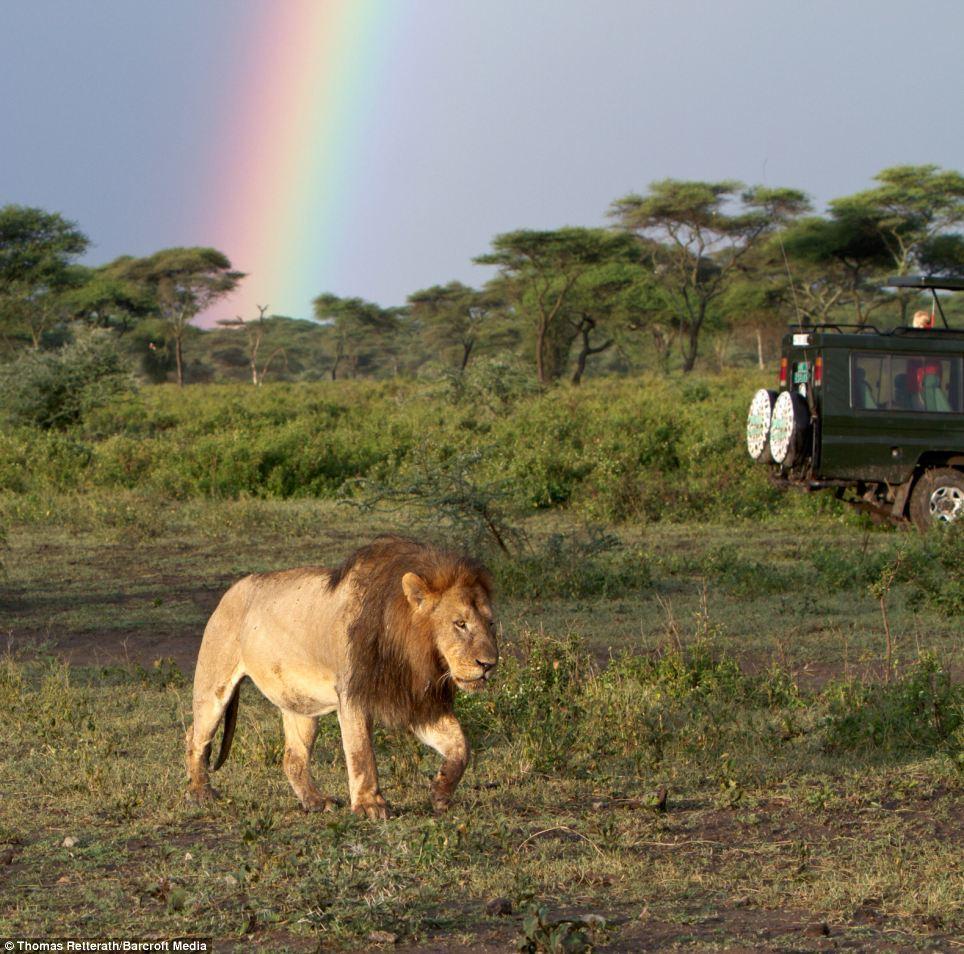 Photo du roi des animaux - Animaux du roi lion ...