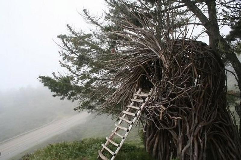 nests04 Гнезда для людей
