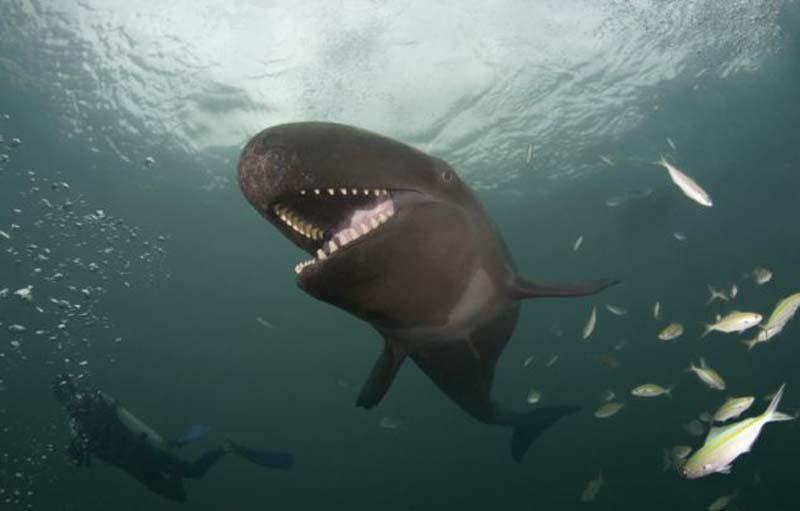 Снимки кита были сделаны на побережье Гавайев.  При встрече с фотографами кит с радостью им...