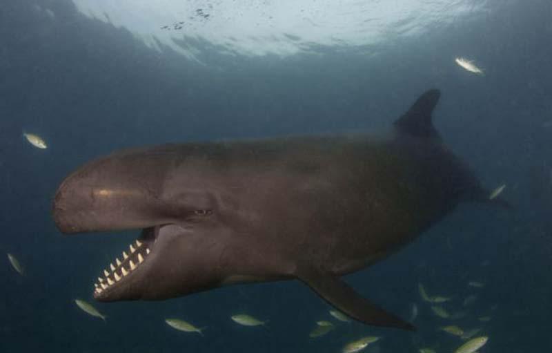 ulibayushiesyakit 7 Улыбающийся кит.