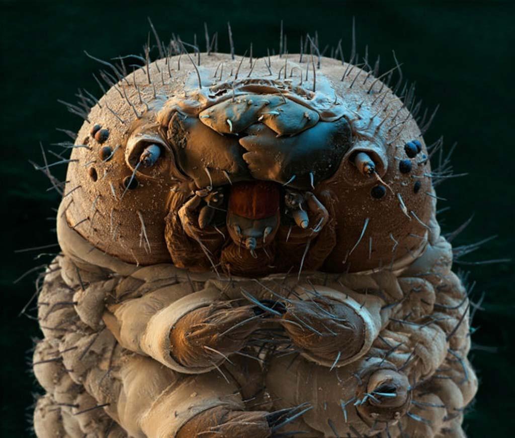 15udivitelnixsozdanii 15 listopada niesamowite stworzenia, które nie widzą bez mikroskopu