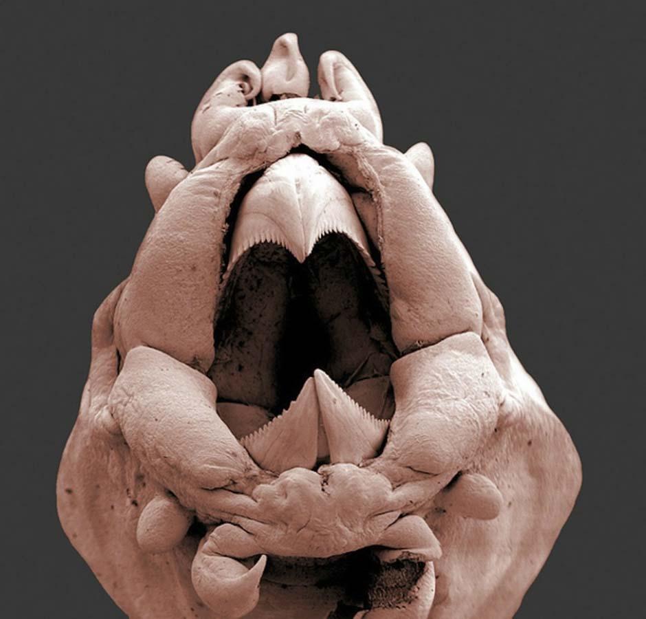 15udivitelnixsozdanii 15 marca niesamowite stworzenia, które nie widzą bez mikroskopu