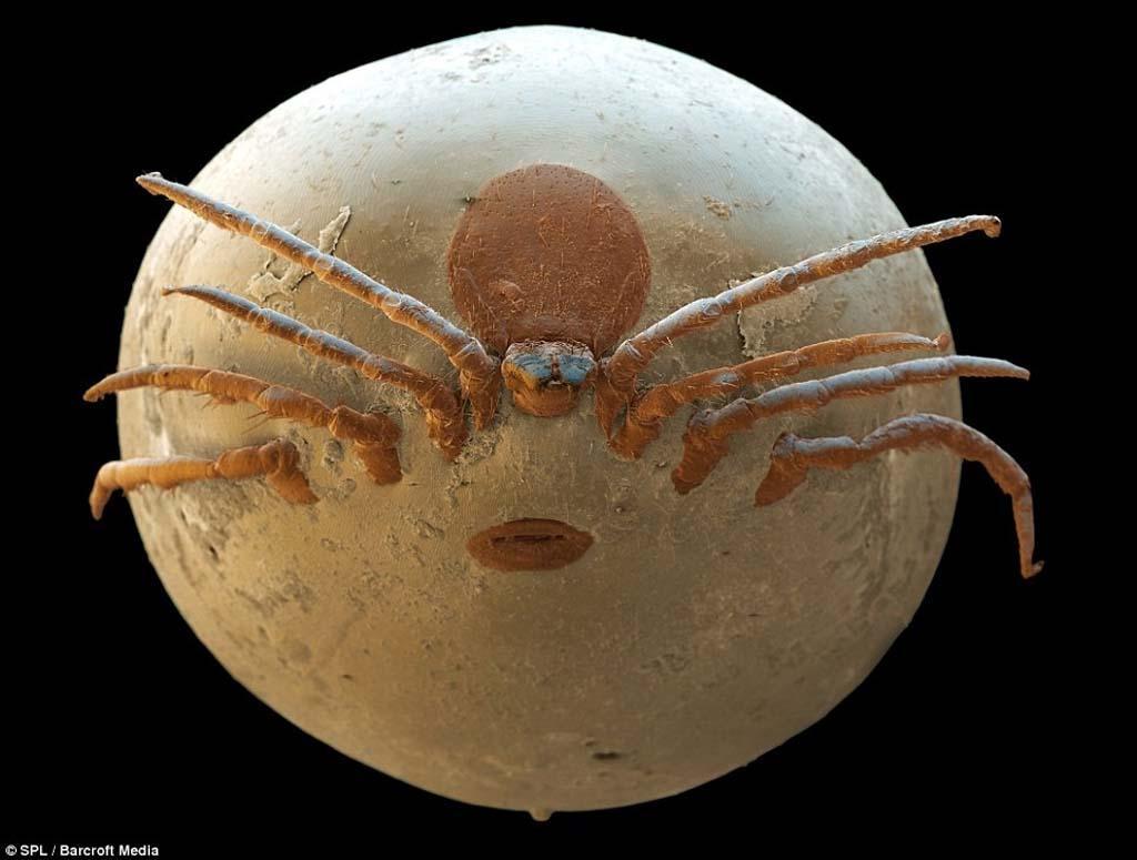 15udivitelnixsozdanii 15 lipca niesamowite stworzenia, które nie widzą bez mikroskopu