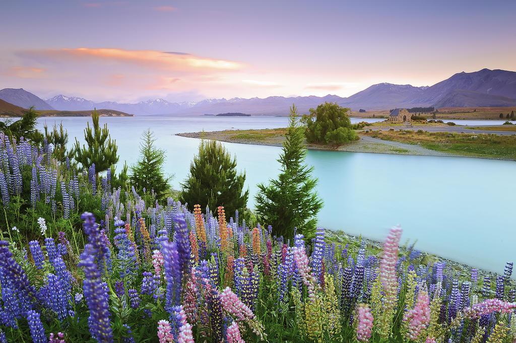 7979403351 fde85463f7 b Красочное цветение люпинов на озере Текапо