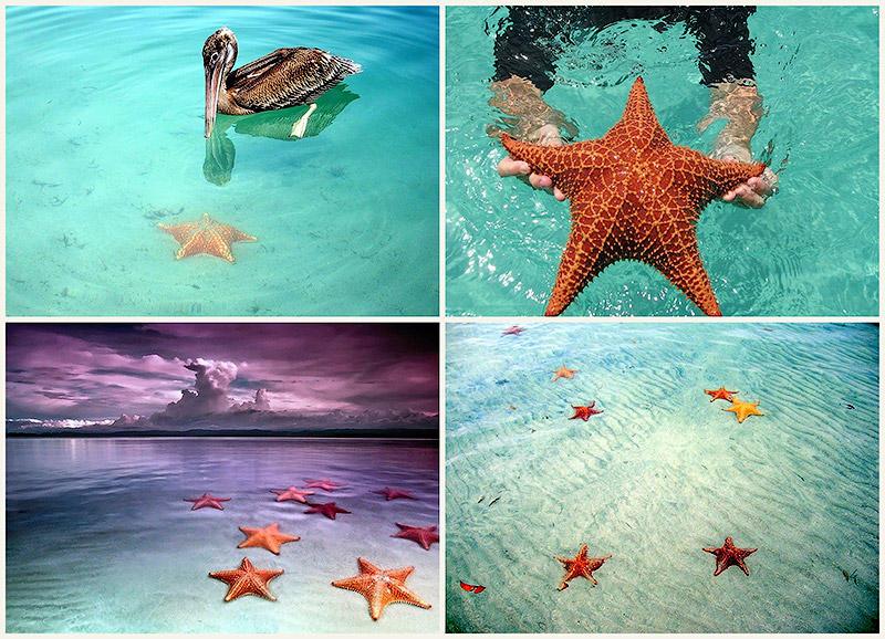 BIGPIC31 Пляж морских звезд — Бока дель Драго